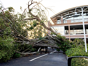 A tree down at Woodward, Pires & Lombardo in Naples