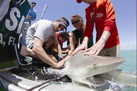 DiveBar crew/Christine Shepard/RJ Dunlap Marine Conservation Program