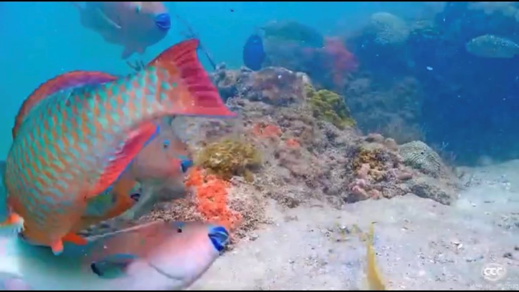 The Fading Color of Coral: Anthropogenic Threats to Our Native Reefs